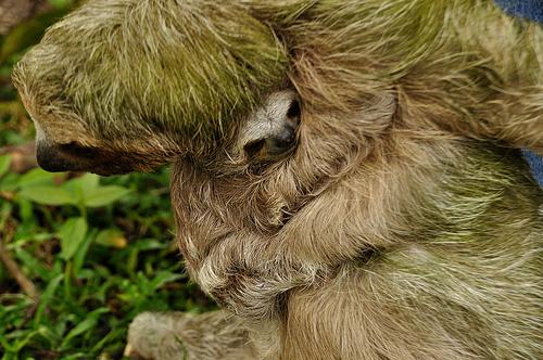 amazing sloth pictures
